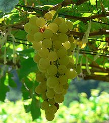 2012-07-18-215pxChenin_blanc_grapes.jpg
