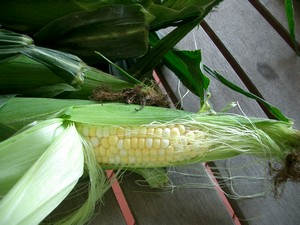 2012-07-19-AccidentalLocavoreCornontheCob.jpg