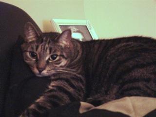 2012-07-19-Pet1.jpg