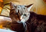 2012-07-19-Pet2.jpg