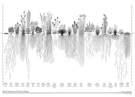 2012-07-19-RootSystemsbyHeidiNatura.jpg