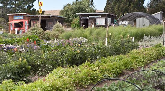2012-07-22-Homelessgarden.jpg