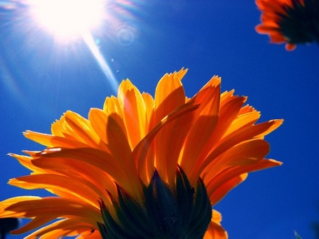 Image result for sunlight and flowers