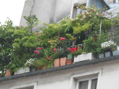 2012-08-01-flowers.jpg