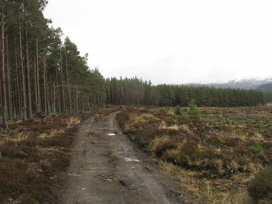 2012-08-02-woods.jpg