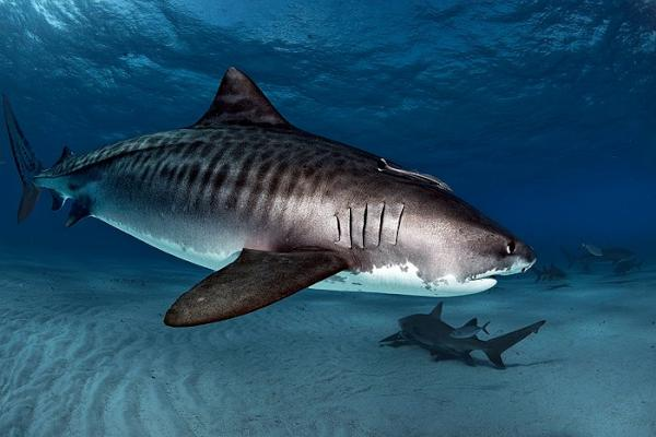 saving ourselves shark hunting Killing sharks takes some doing, so they're often tossed overboard alive  the  international union for conservation of nature (iucn) lacks data to determine   soup, we will likely prove ourselves one of nature's least successful experiments.