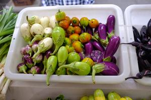 2012-08-10-BodhiTreeEggplants1.jpg