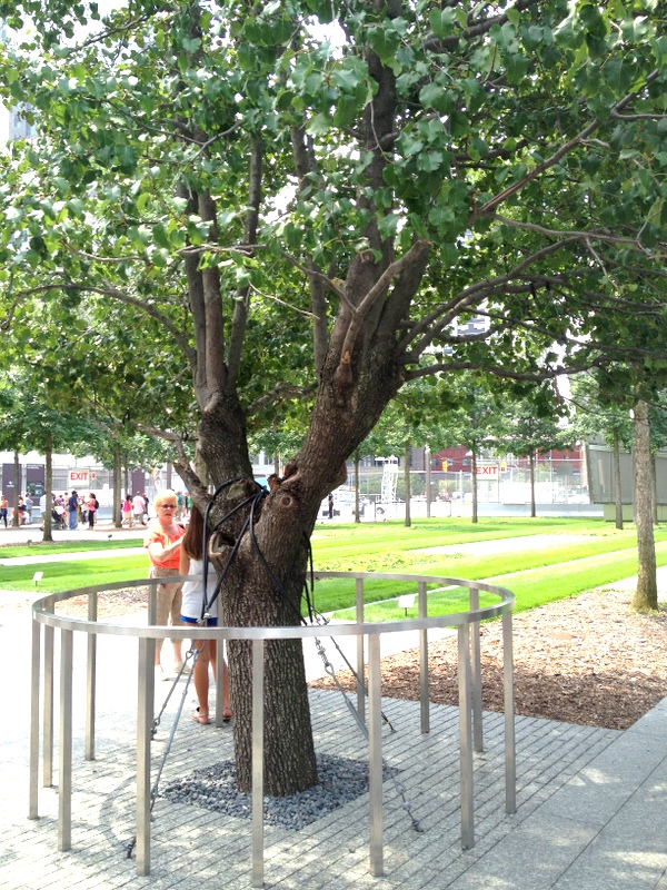 2012-08-12-SurvivorTree.JPG
