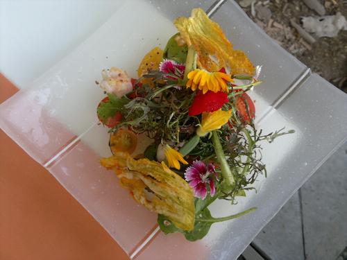 2012-08-20-TamarillosLanguostineflowersHP.jpg