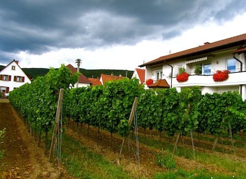 2012-08-21-VineyardsinthebackgardensofresidentialhomesinthePalatinate.jpg