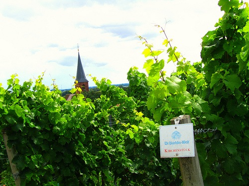 2012-08-21-VineyardsinthetownofForstinthePalatinate.jpeg