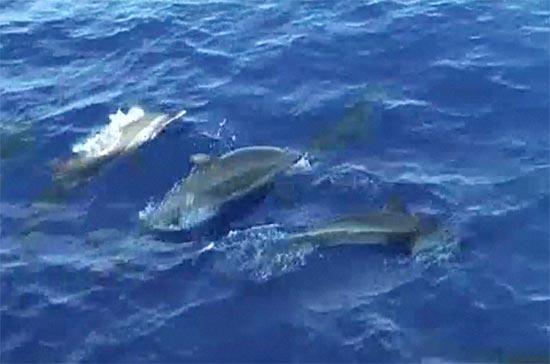 2012-08-21-nyaddolphin2.jpg