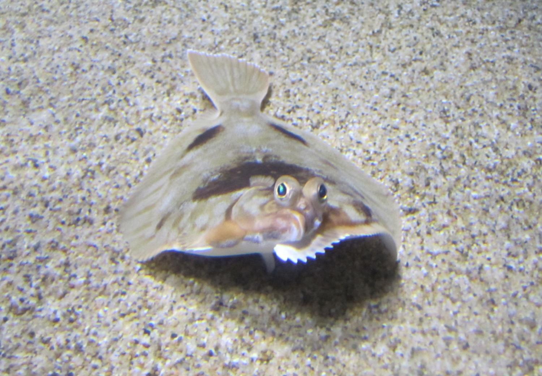 2012-08-24-fish.JPG