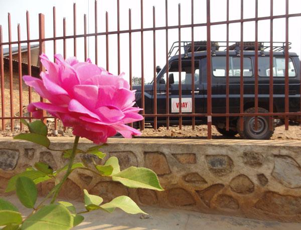 2012-08-27-congo_rose-congo_rose_vday_vehicle.jpg