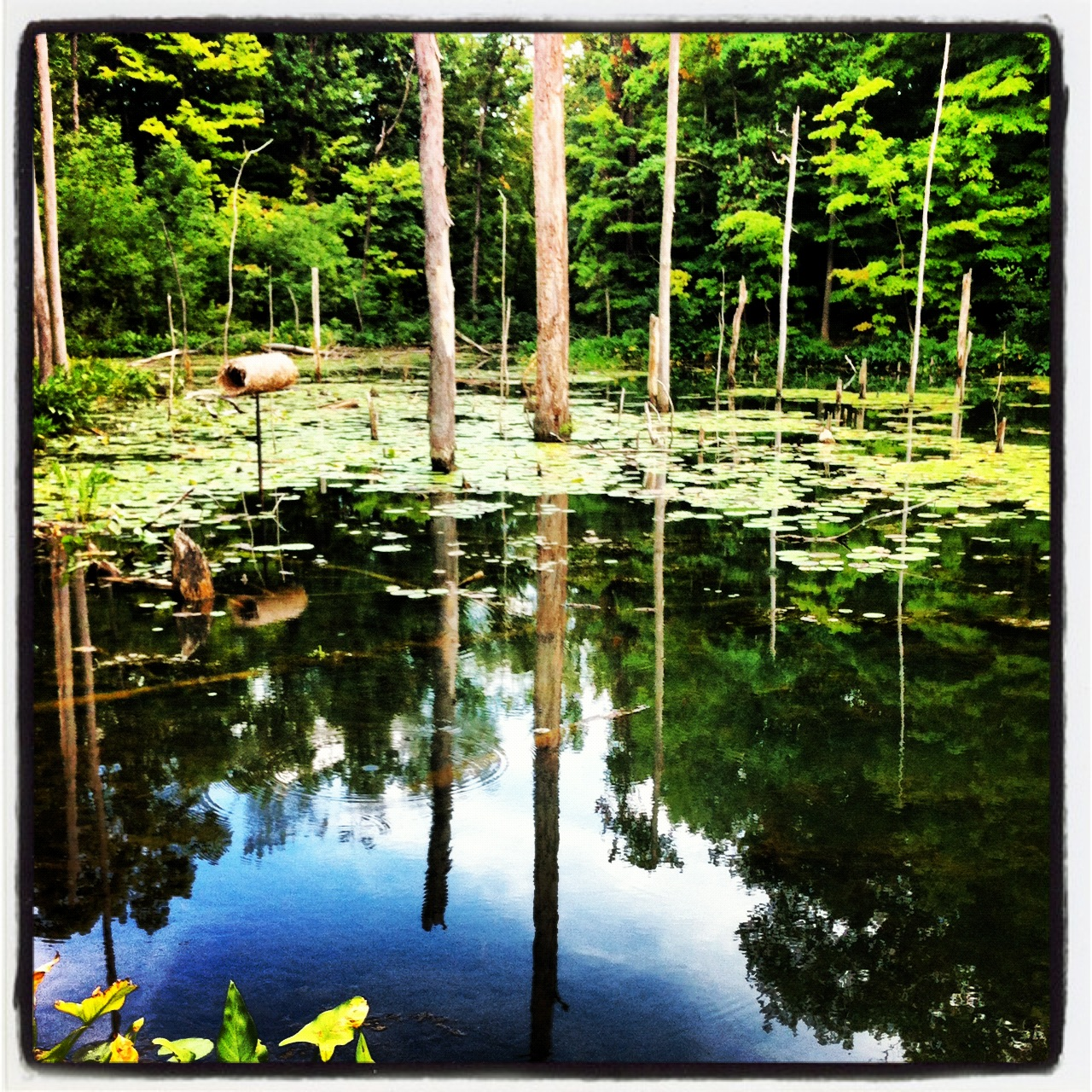 2012-08-29-NatureIsZen.jpg