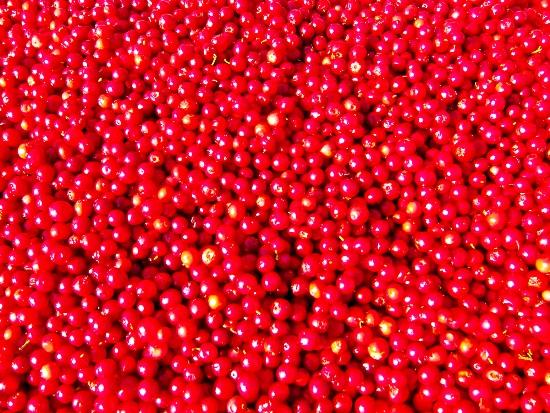 2012-08-31-Redcurrants.jpg