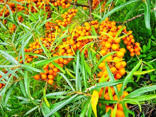 2012-09-03-Berries2.jpg