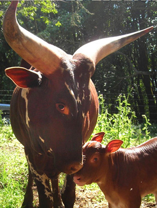 Julie Brothers: Farm to Fork Across America: Cow Horns & Moonbeams, A Taste of Place