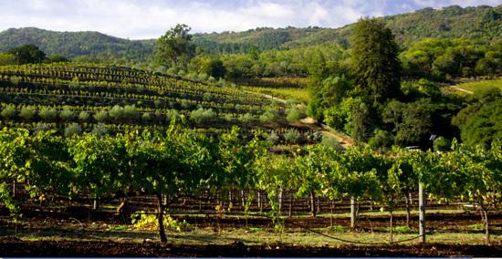 2012-09-05-winery.jpg