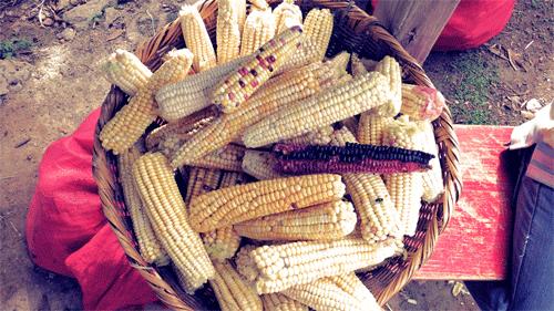 2012-09-07-maizebasket.png