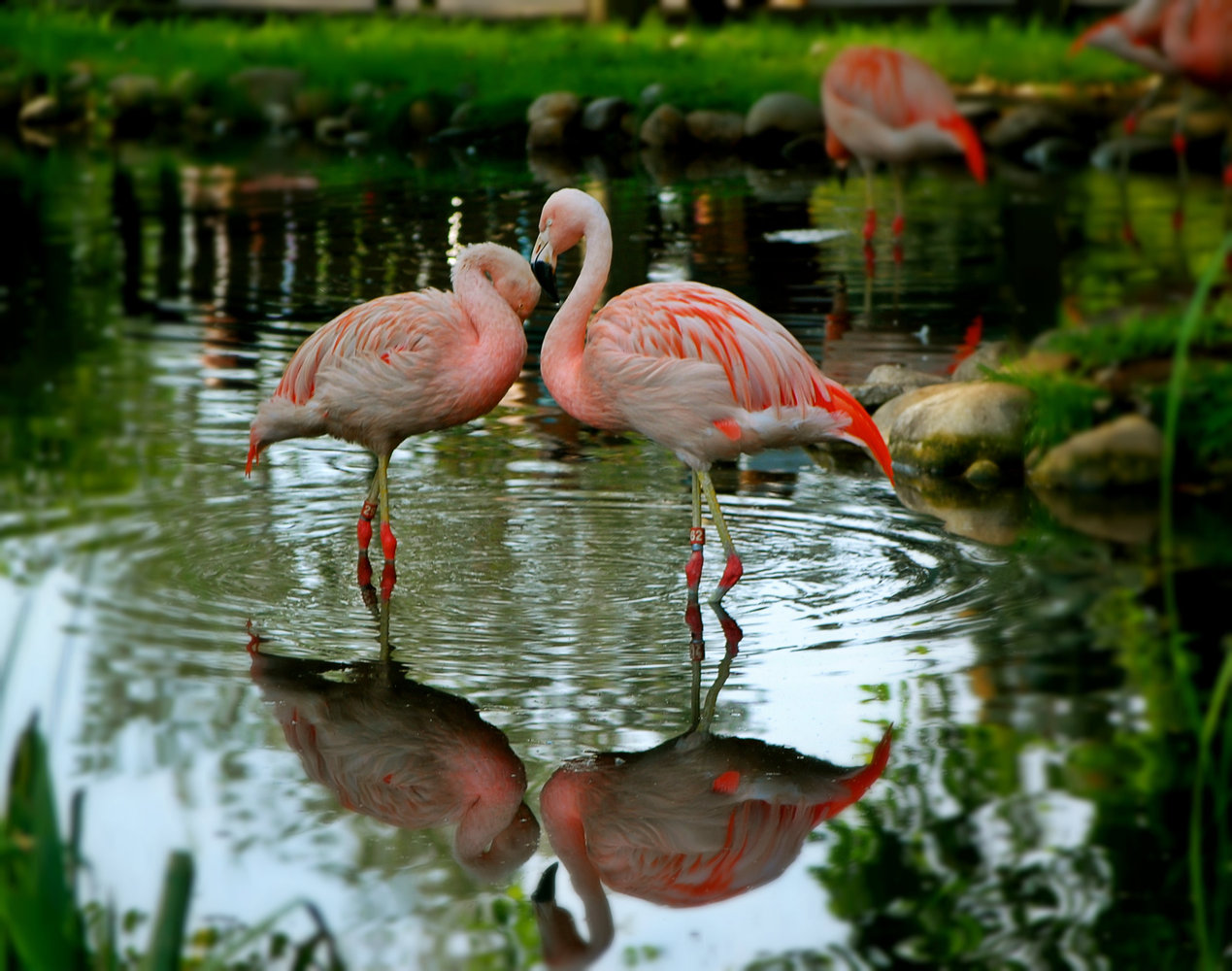 2012-09-08-rsz_flamingos1.jpg