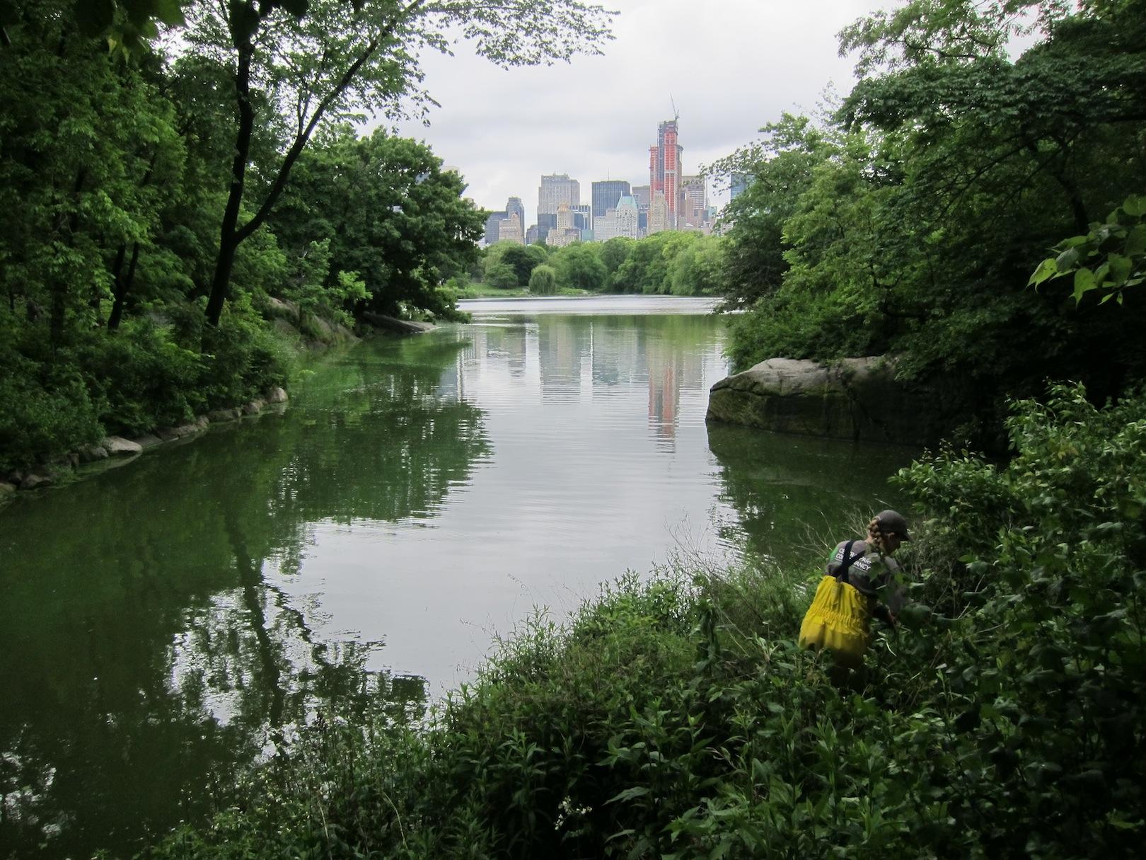 2012-09-10-NYNYCCentralParkWoodlands052012138copy.jpg
