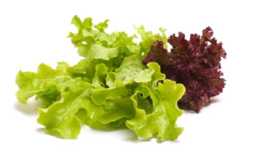 2012-09-12-lettuce_eatsavvy.jpg