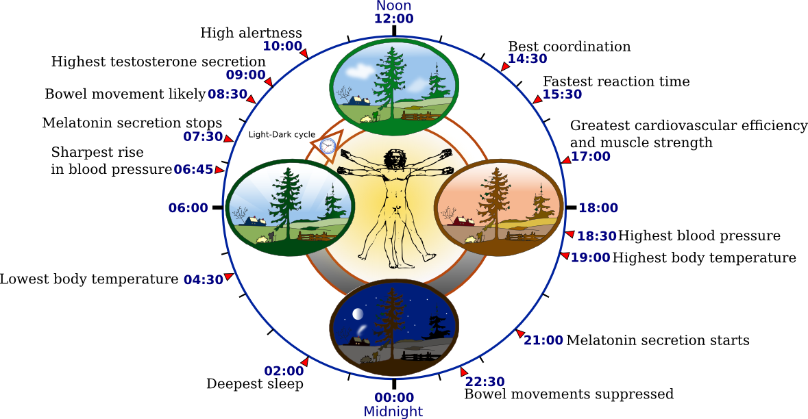 2012-09-22-Biological_clock_human.PNG