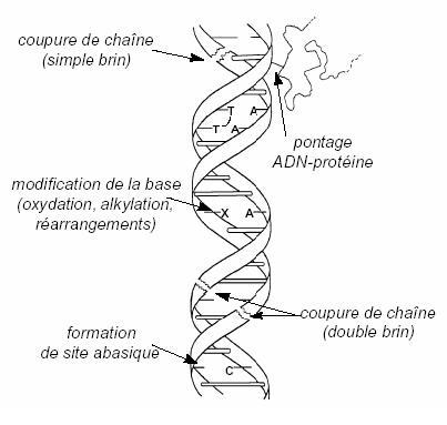 2012-09-24-Mutation.JPG