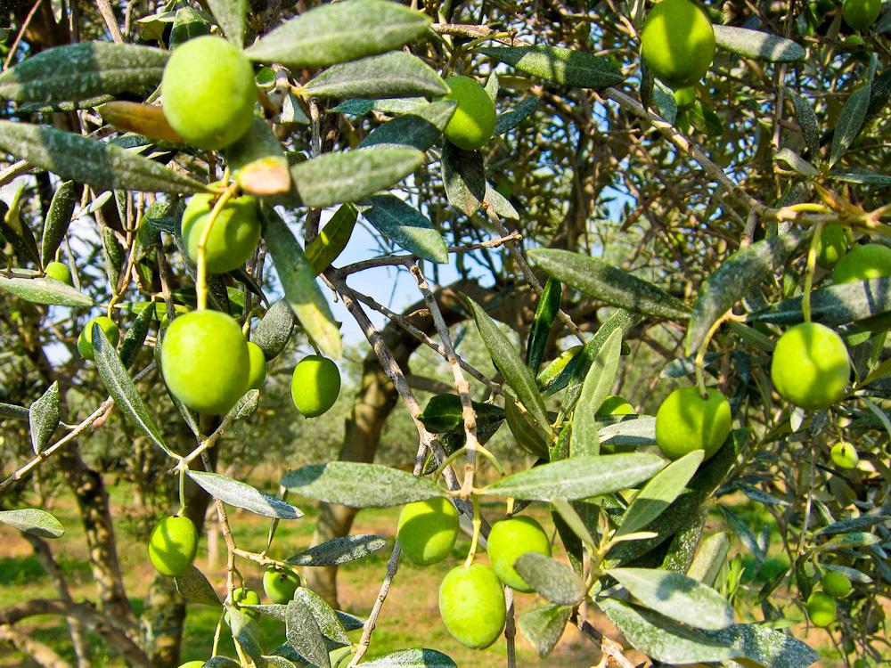 2012-09-24-Olives.jpg