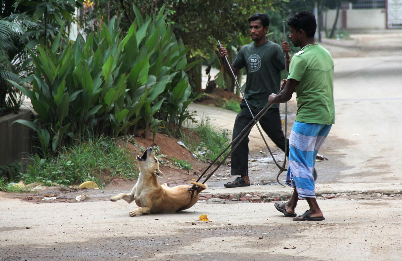 2012-09-26-BangladeshDogCulling2.jpg