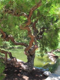 2012-09-26-pine250.jpg