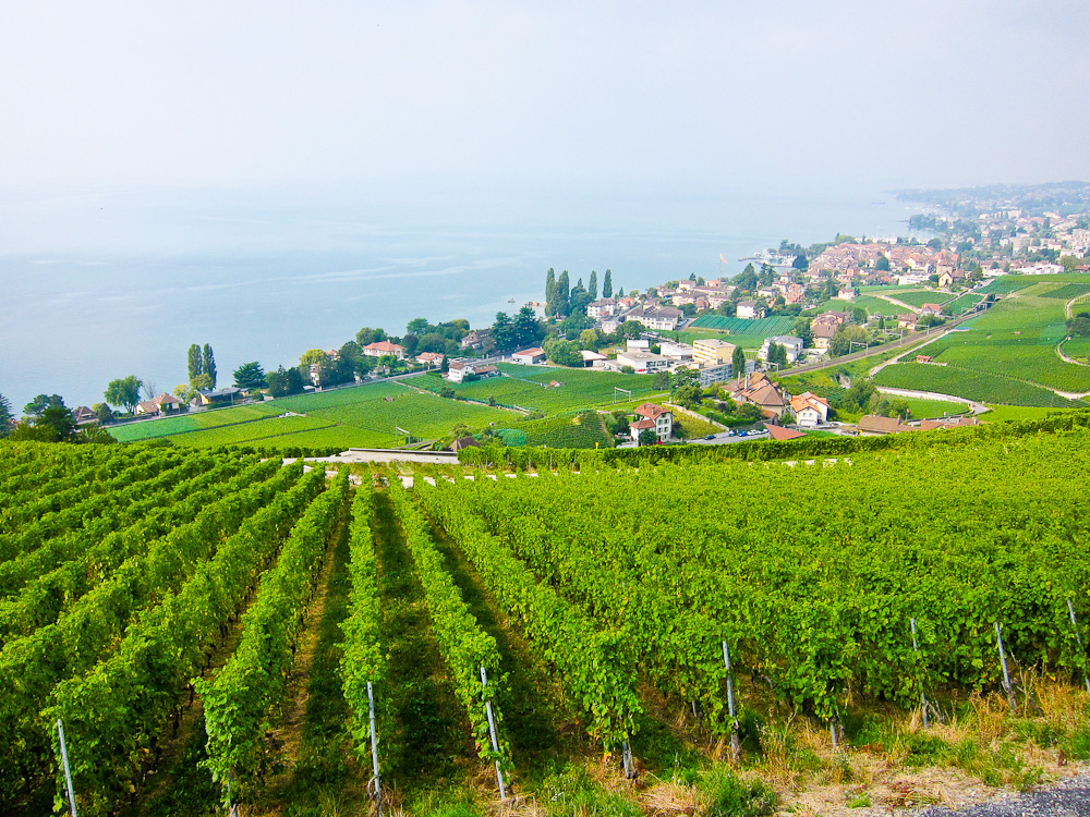2012-09-27-Vineyards.jpg