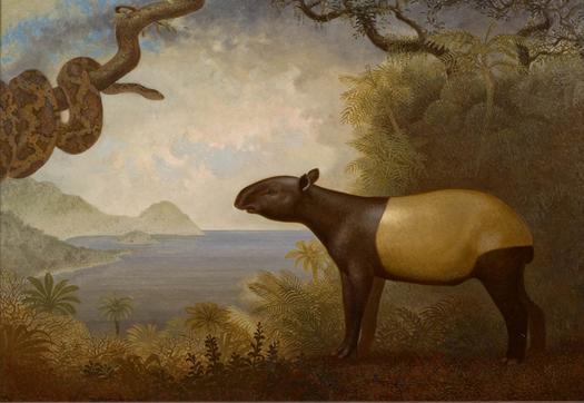 2012-09-29-Tapir.Snake.web001.jpg