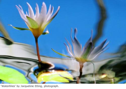 2012-10-01-waterlilies.jpg