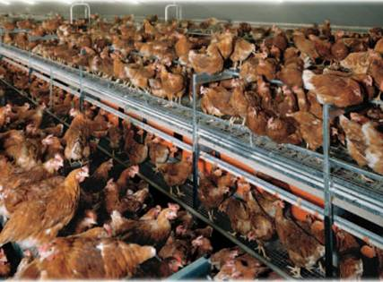 2012-10-03-ChickensinWarehouse.jpg