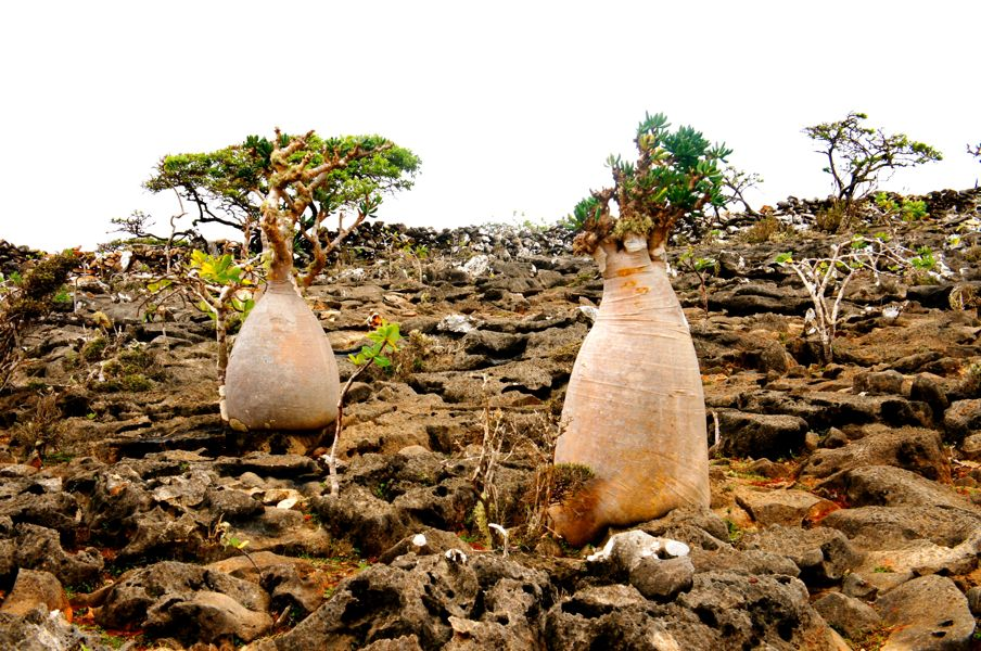 socotra island how to get there