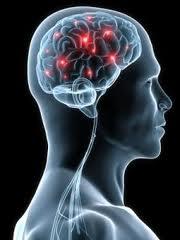 2012-10-04-brain.jpg