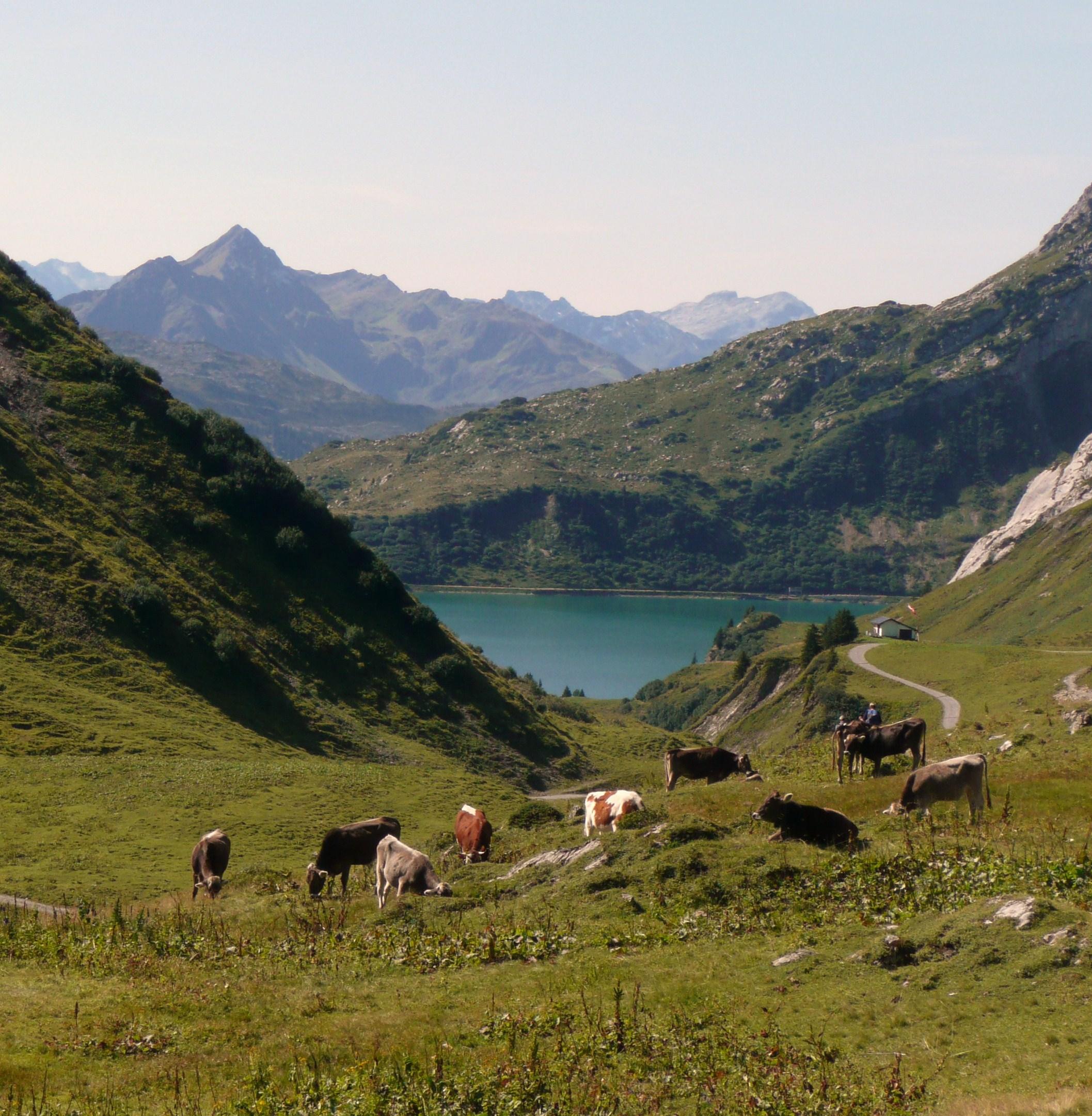2012-10-08-cows.JPG