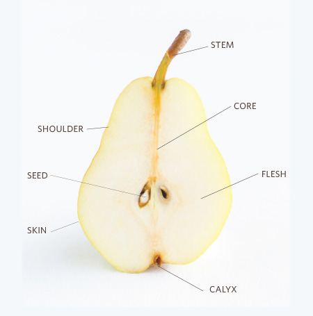 2012-10-09-pear_anatomyno_title.jpg