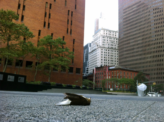 2012-10-10-deadbird.jpg