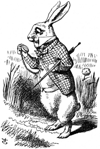 2012-10-11-rabbit.jpg