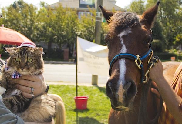 2012-10-17-horse.jpg