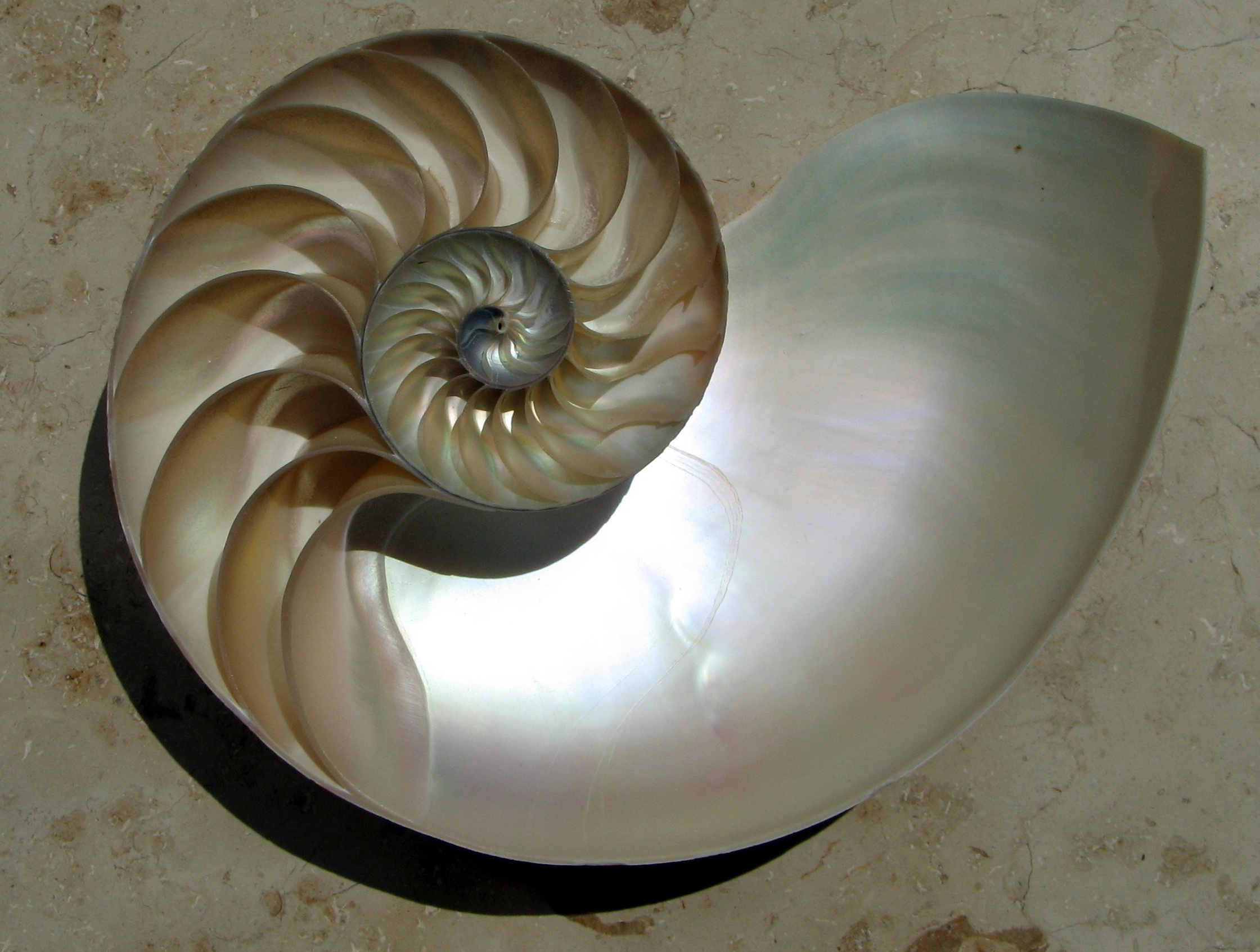 2012-10-18-NautilusCutawayLogarithmicSpiral.jpg