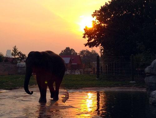 2012-10-19-elephantzoo.jpg