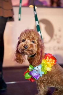 2012-10-22-PawsfortheCause2012RyanEmberley7.jpg