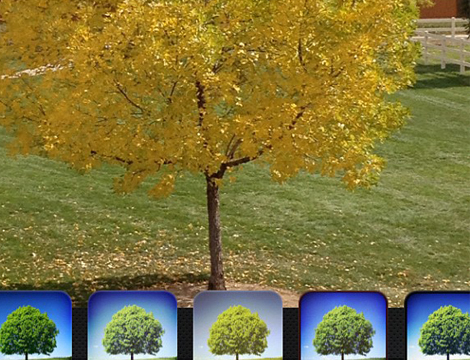2012-10-25-vir_foliage.jpg