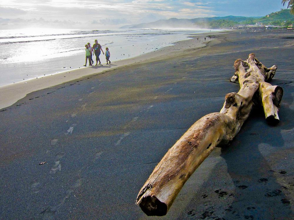 2012-10-30-BeachTreeTrunk.jpg