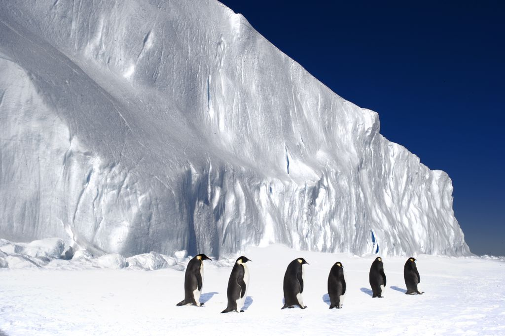 2012-11-01-s.o.penguins.jpg