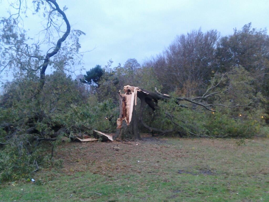 2012-11-02-treebroken.jpg